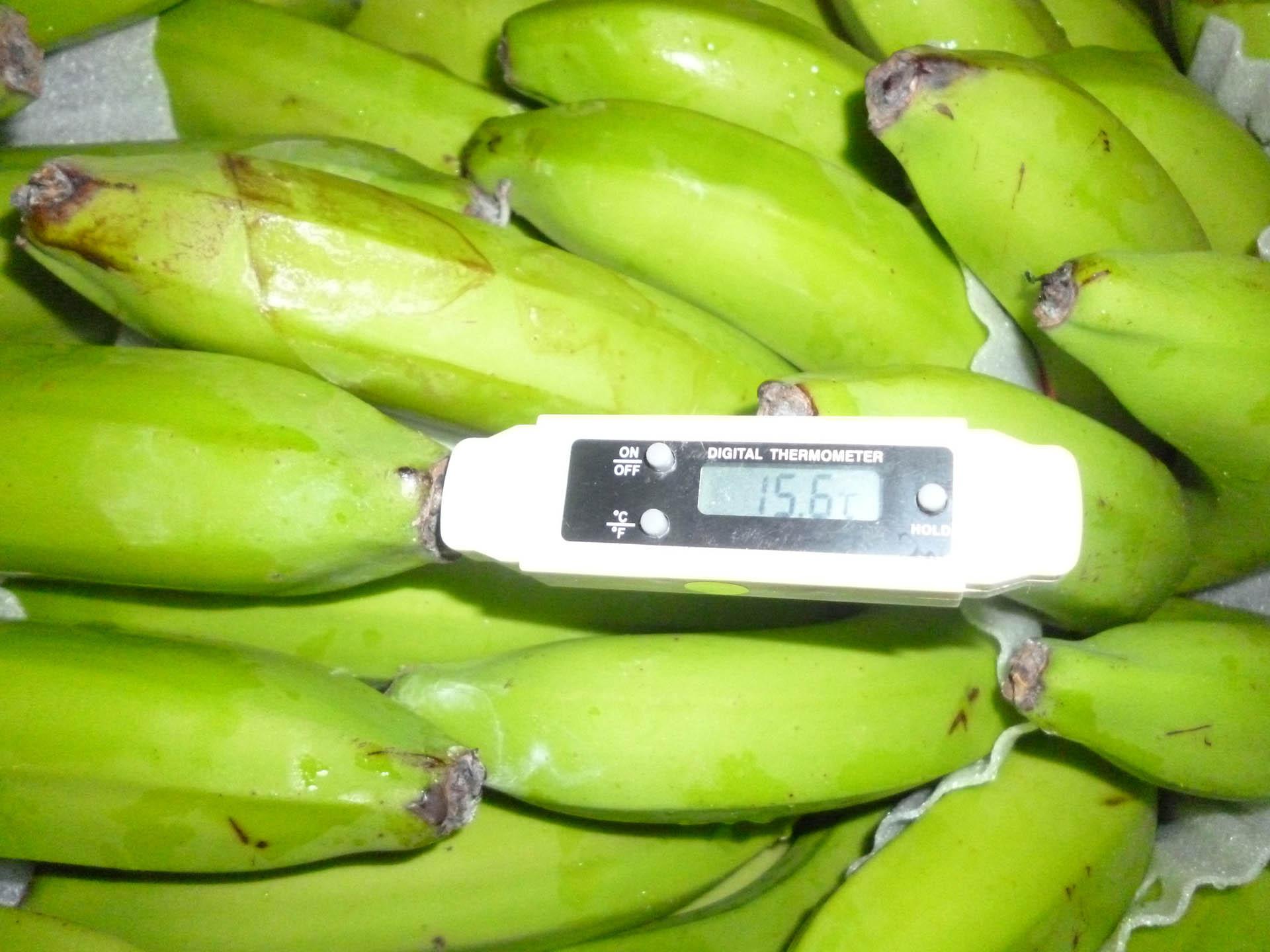 Fruit Inspection 4